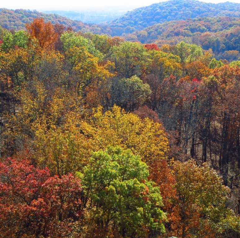 Aerial of trees in Shawnee National Forest
